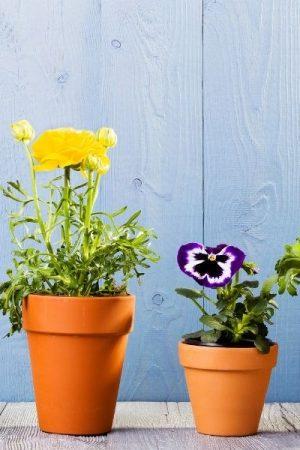 4 dingen om op te letten bij het kopen van bloempotten